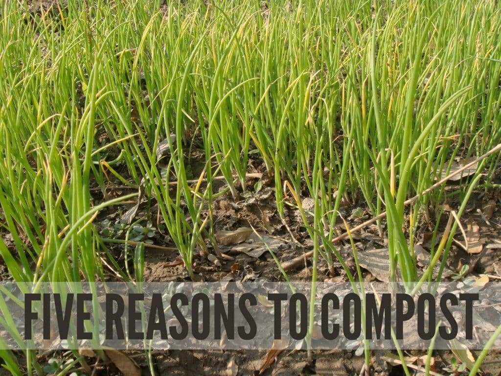 5 Reasons To Compost