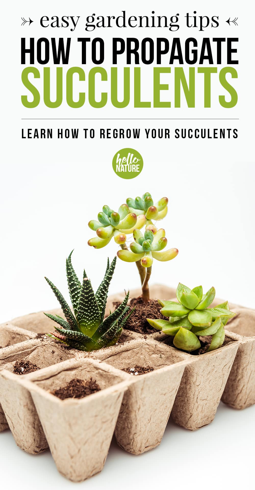 A quick and easy guide on how to propagate succulents. It'll help even those with the blackest of thumbs regrow succulents from the leaves of other succulents. You'll be surrounded in these cute little plants in no time! #Succulents #SucculentCare #Gardening