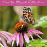 How To Attract Butterflies and Keep Them Coming