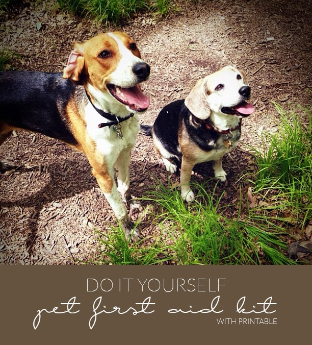 DIY Pet First Aid Kit With Printable