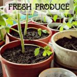 regrowfreshproduce
