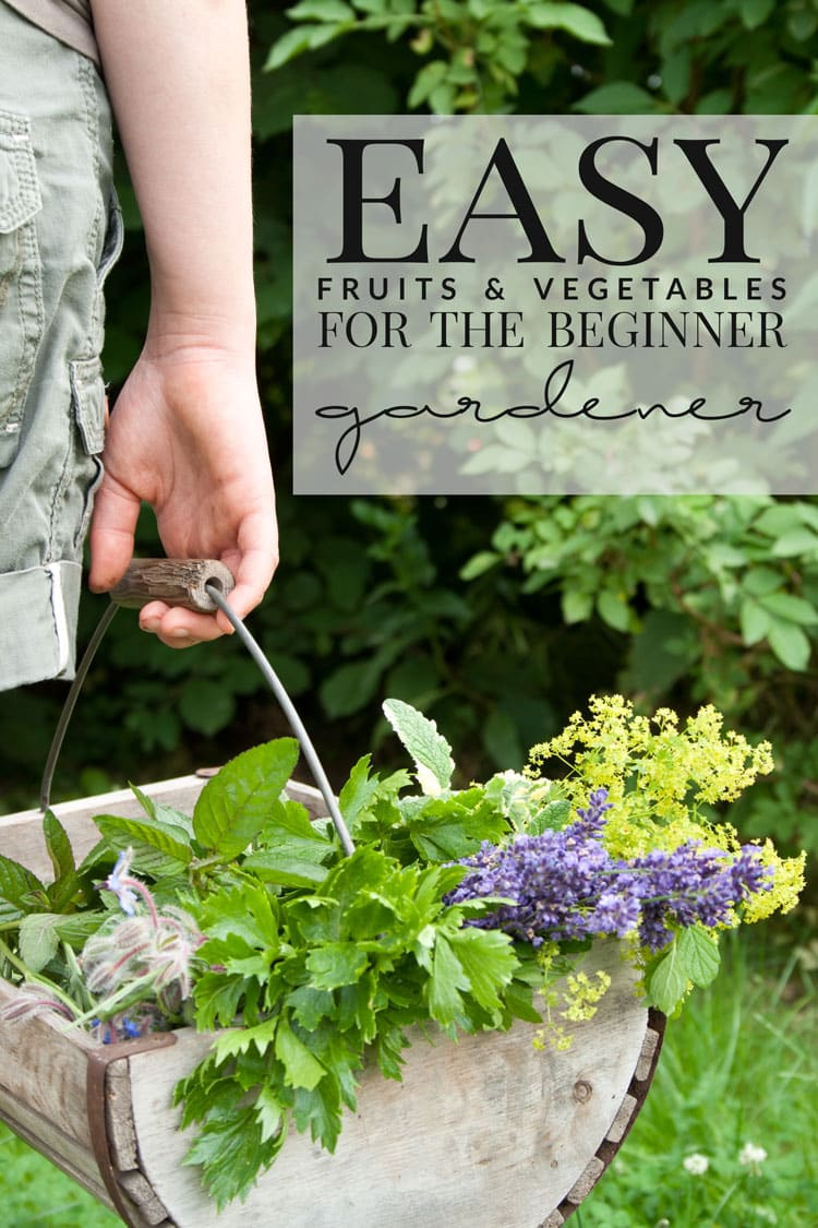 A list of easy fruits and vegetables for the beginner gardener. Now there's no excuse to not be growing your own food!