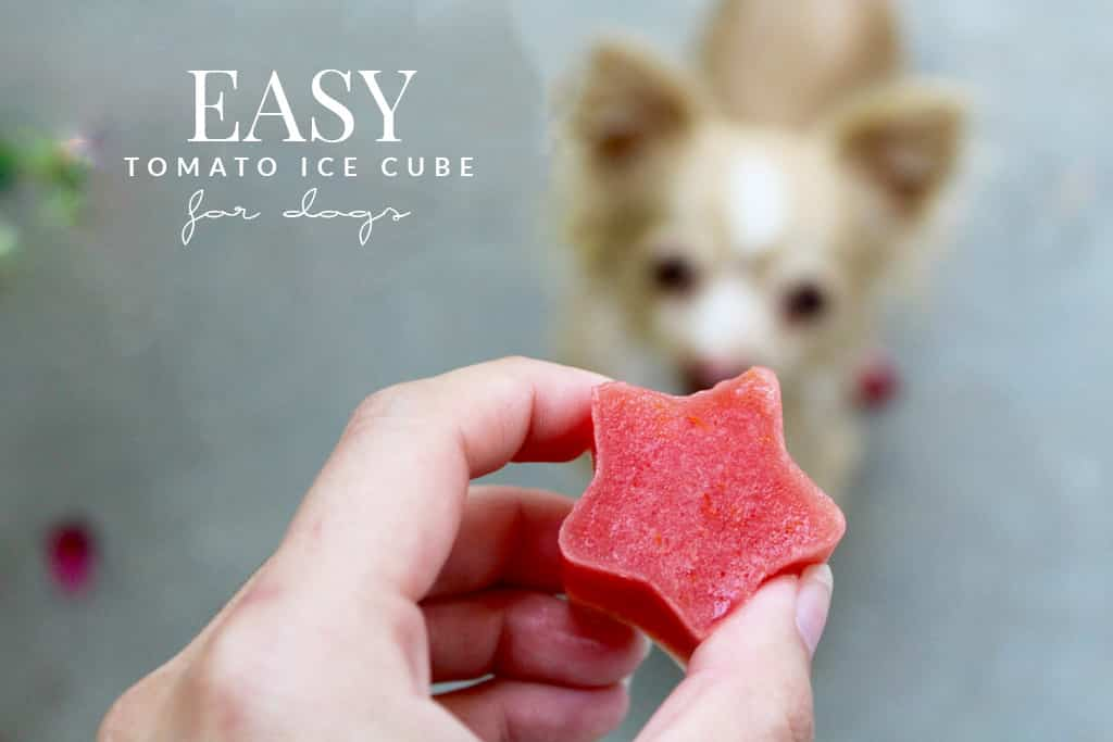 These Easy Tomato Ice Cube Treats for dogs are great for cooling down your pups this Summer!