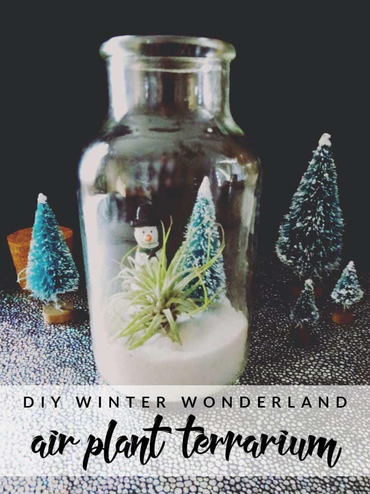 Need some new decor for Winter? This winter wonderland air plant terrarium is perfect for those with or without a green thumb!