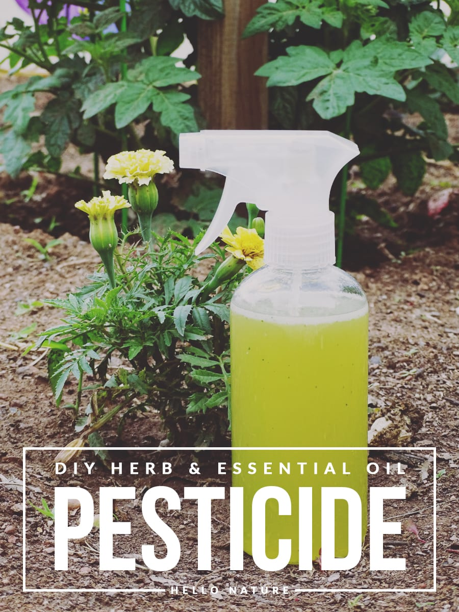 a study of homemade pesticides for