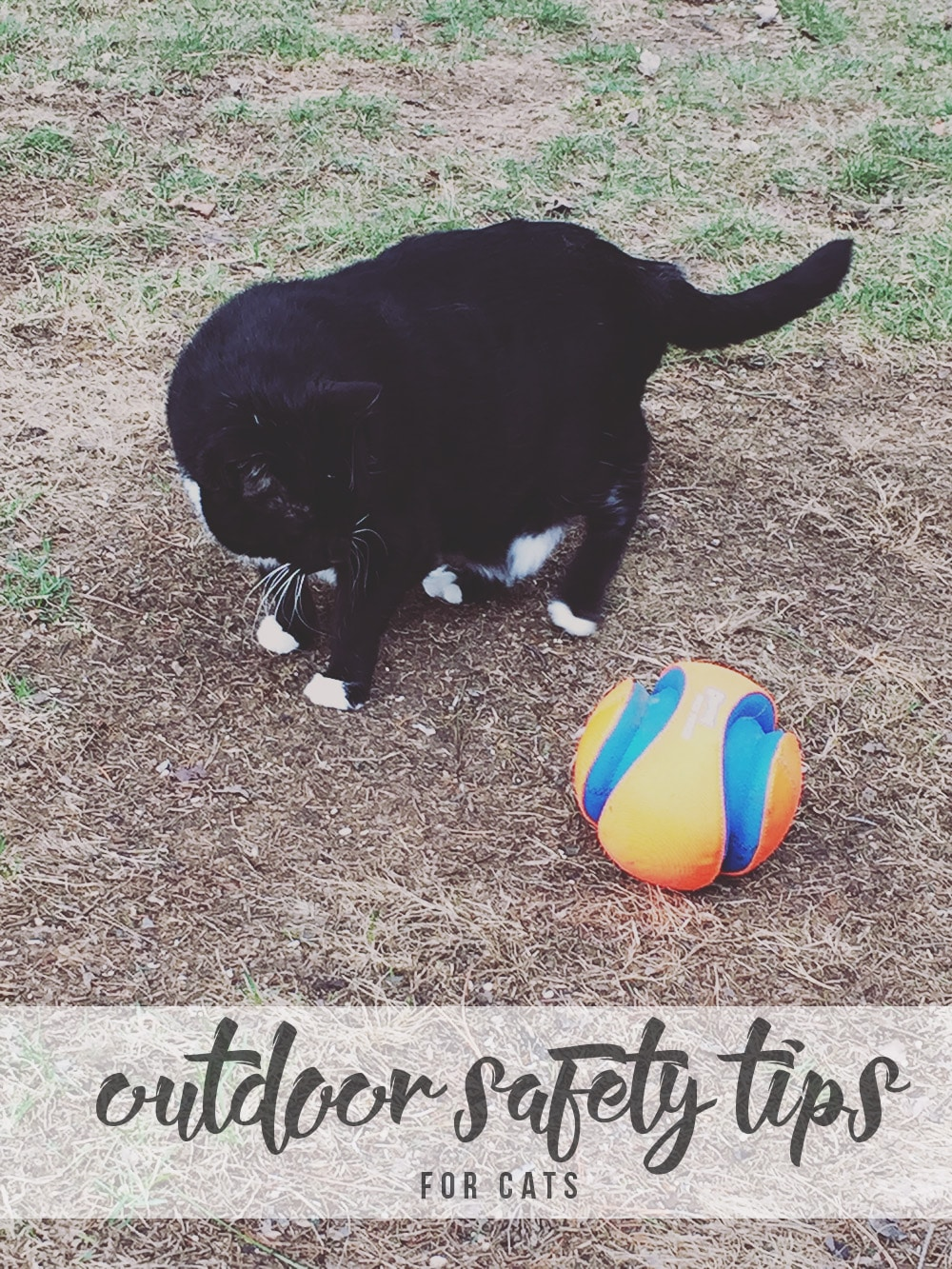 Share your love for nature with your cat. These outdoor safety tips for cats will ensure that you both have fun while staying safe!