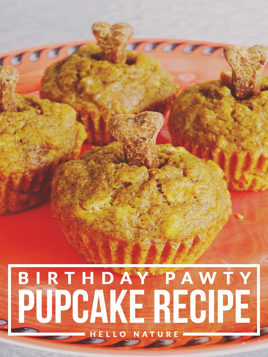 Looking for a fun way to celebrate your pup's next major milestone? Treat them to an easy to make pupcake that your dog is sure to enjoy!