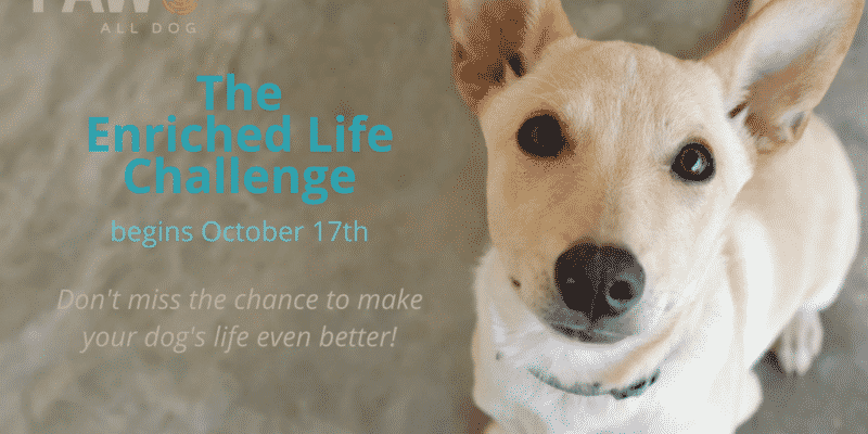 Enrich Your Dog's Life with the #PAW5EnrichedLifeChallenge – Oct 17 to Oct 21