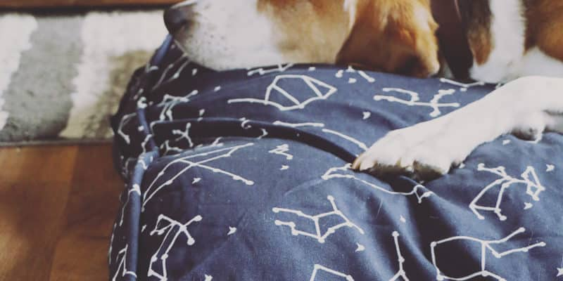 Why Every Pet Owner Needs a Molly Mutt Duvet