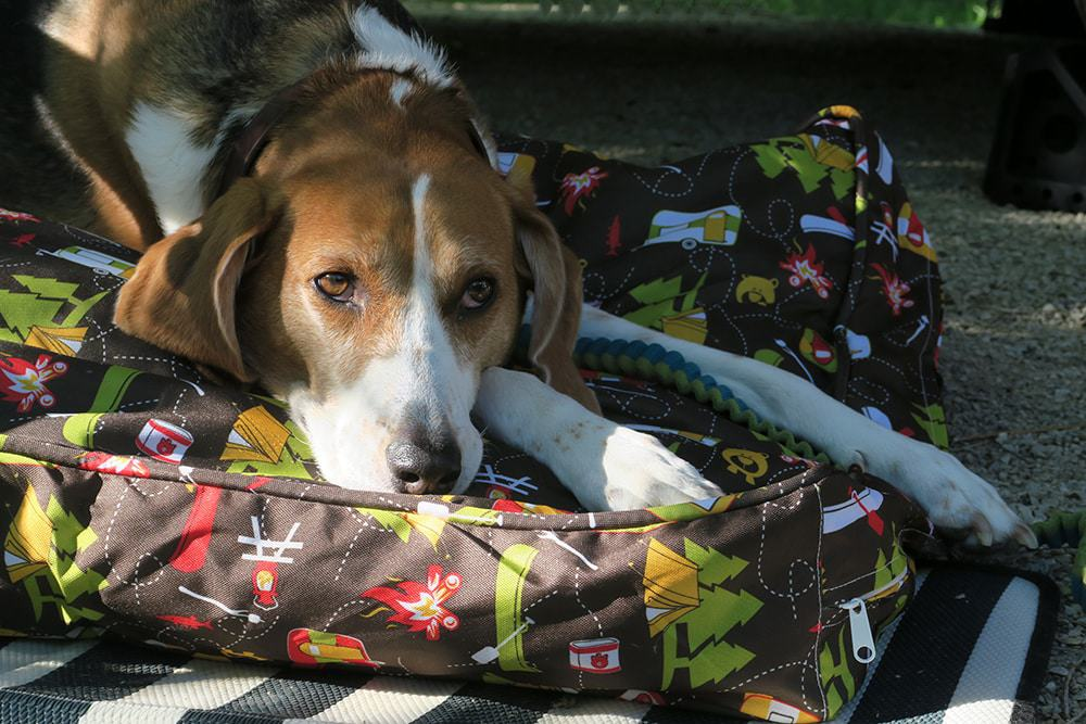 Headed out on your next camping trip with Fido? Make sure you don't forget anything and check out our camping essentials for dogs list!