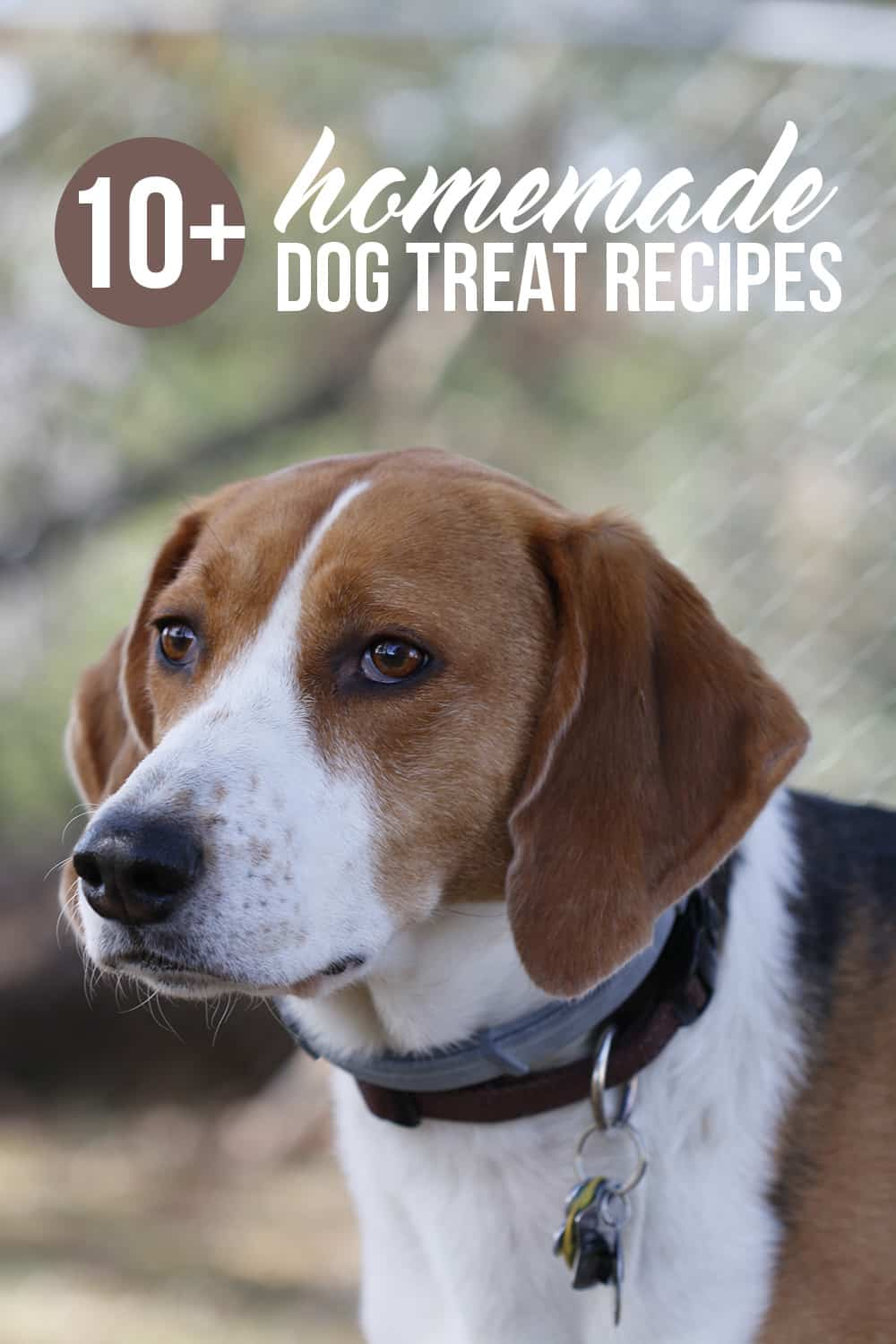Spoiling your pup just got easier! These easy homemade dog treats are the perfect way to show your best friend how much you love them.