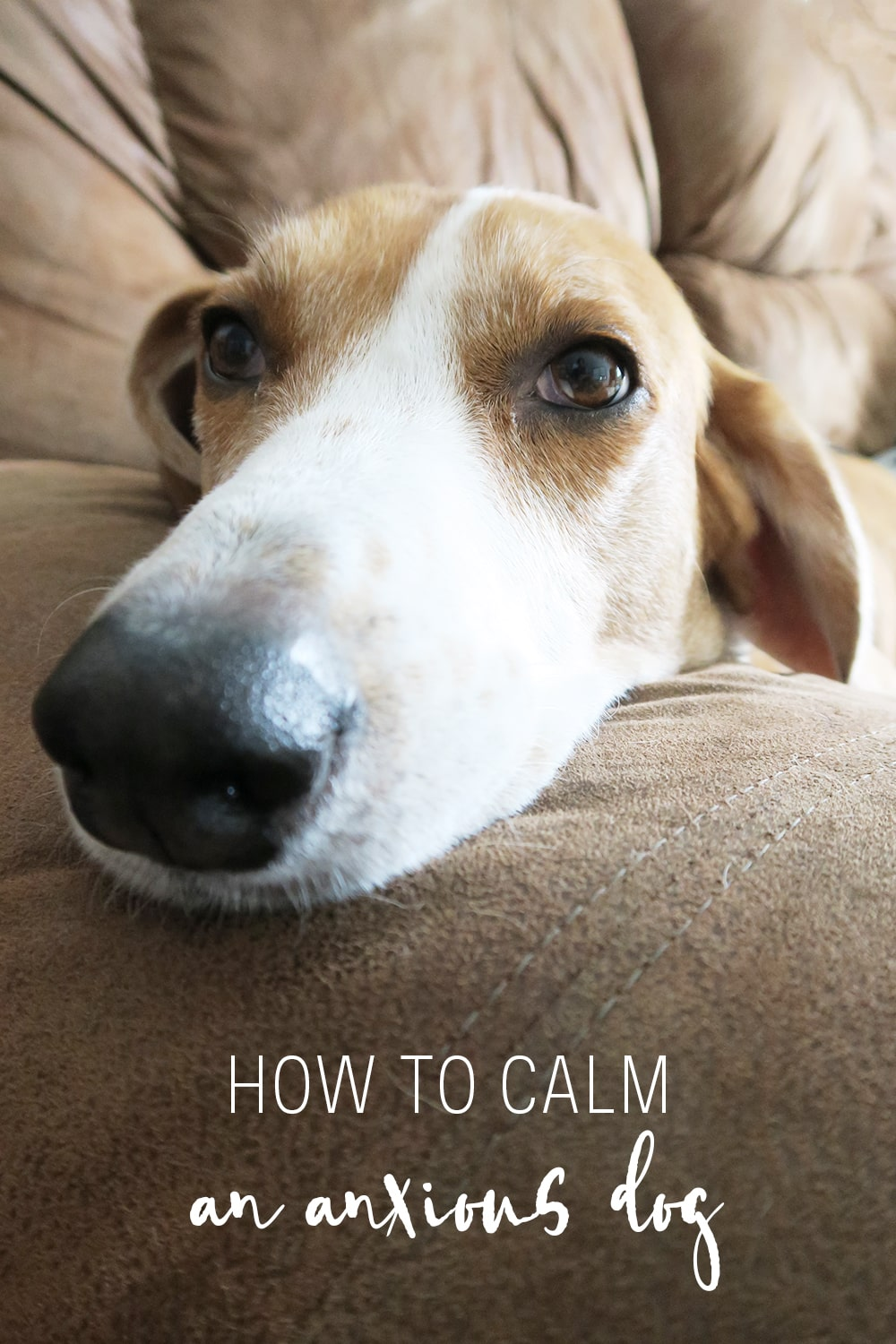 If your dog suffers from anxiety from thunderstorms, fireworks, or being apart - you can ease their stress with this guide on how to calm an anxious dog.