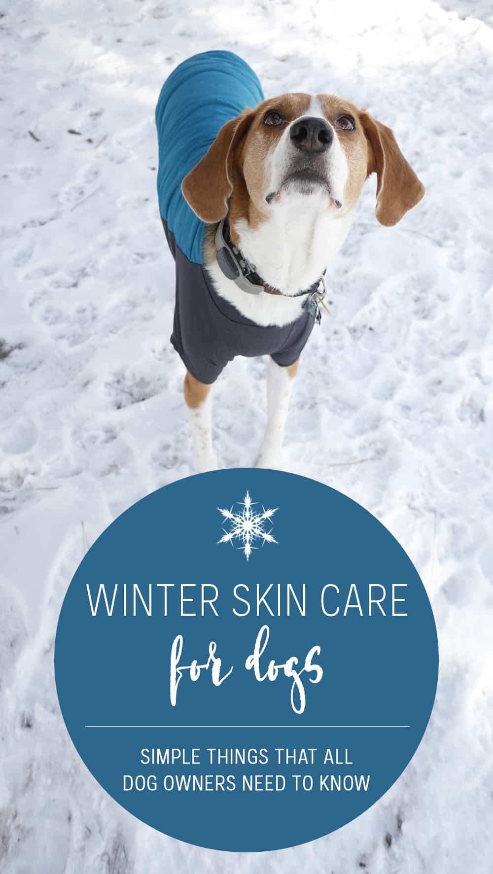 Winter skin care for dogs isn't hard. With just a few extra steps you, can help your furry friend be more comfortable during the colder months.