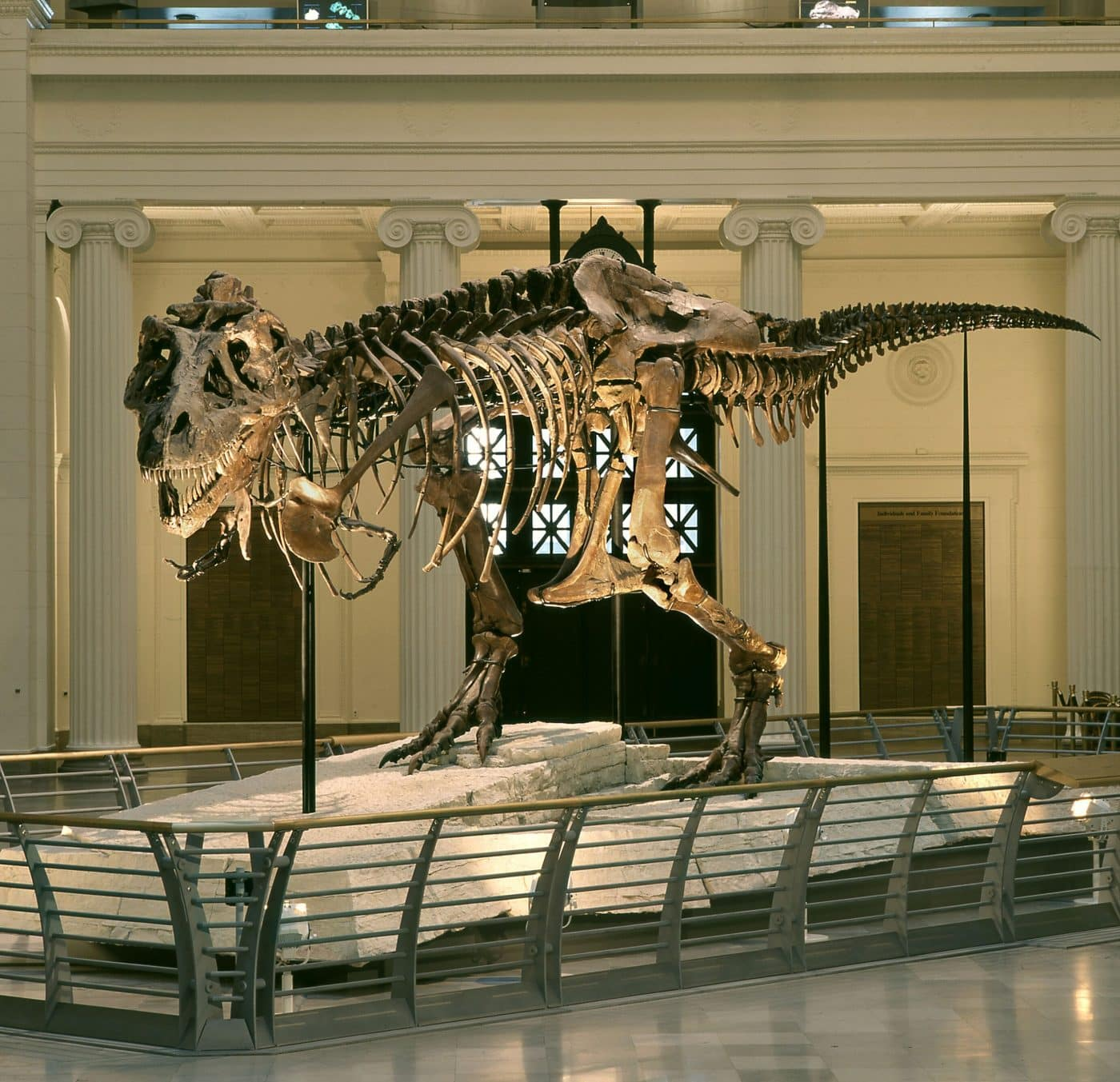 T-Rex Skeleton Sue at the Field Museum