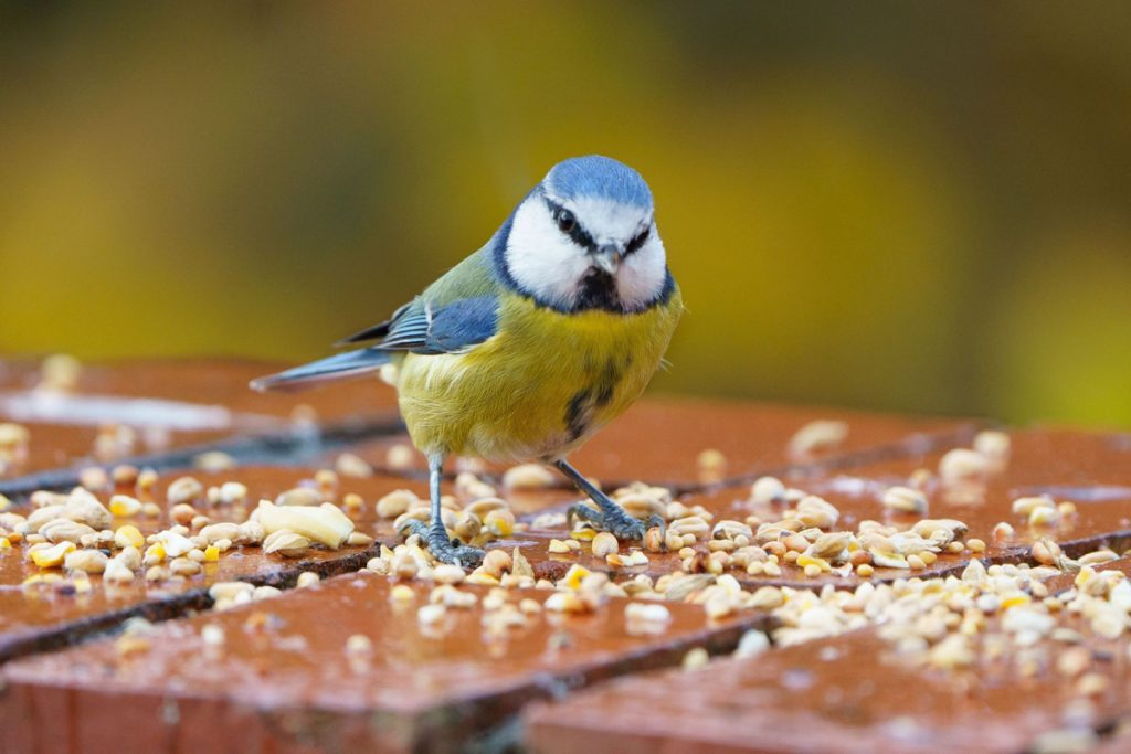 bird with homemade bird food