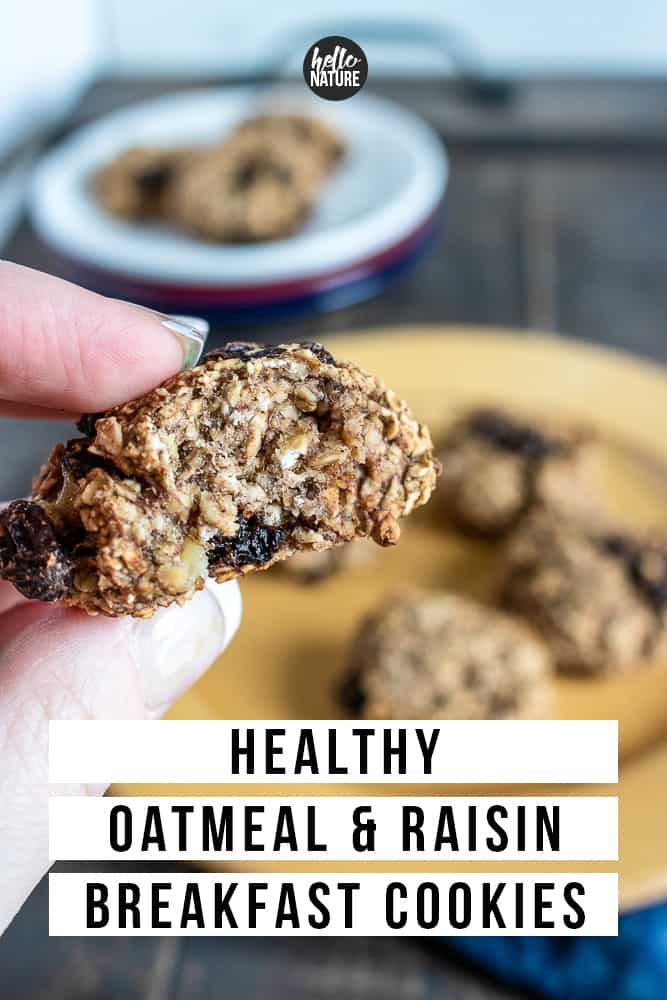 Looking for an easy gluten-free breakfast cookie? You'll want to make these healthy oatmeal raisin cookies with banana! They are delicious raisin cinnamon oatmeal cookies without flour and the whole family can enjoy when they're on the go! Plus, these healthy oatmeal raisin cookies without sugar come without the guilt! #GlutenFree #OatmealCookies #OatmealRaisin #OatmealRaisinCookies #GlutenFreeCookies #GlutenFreeDessert