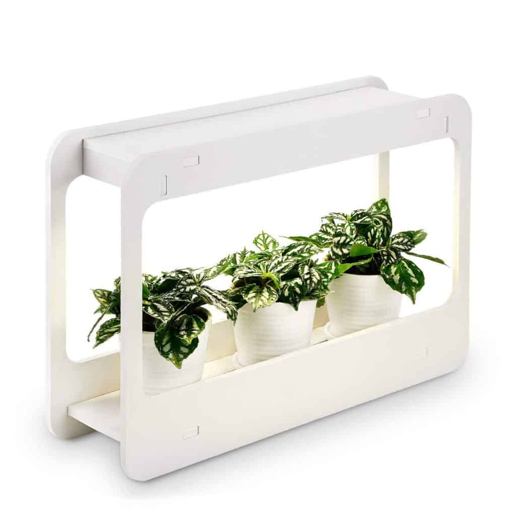 Beginner Indoor Herb Garden Tips