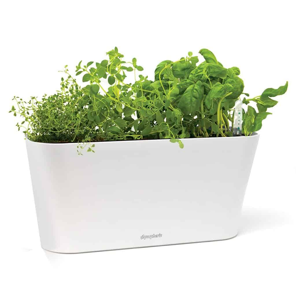How to Grow an Indoor Herb Garden (Plus ideas for indoor herb garden containers)