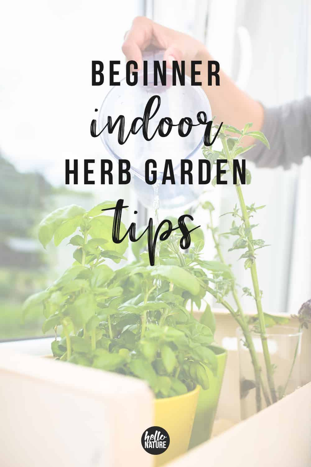 Simple Kitchen Herb Garden Tips for Beginners