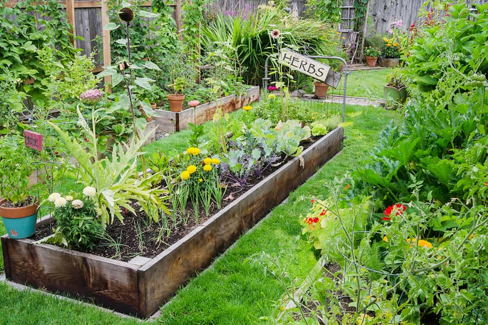 edible landscaping with herbs