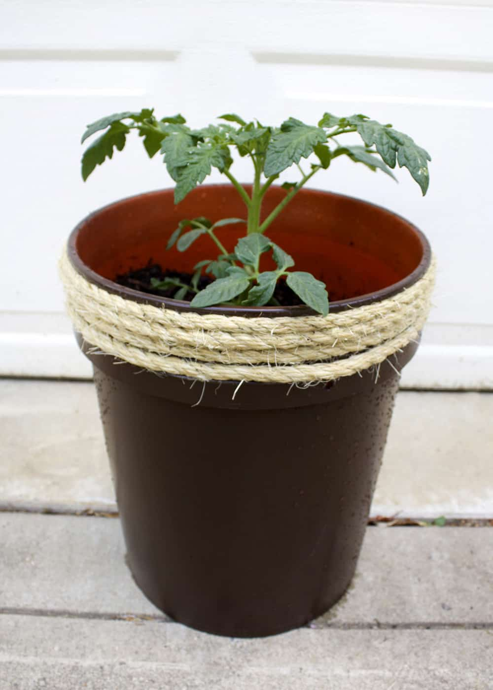 Sisal rope wrapped 5 gallon bucket planter.