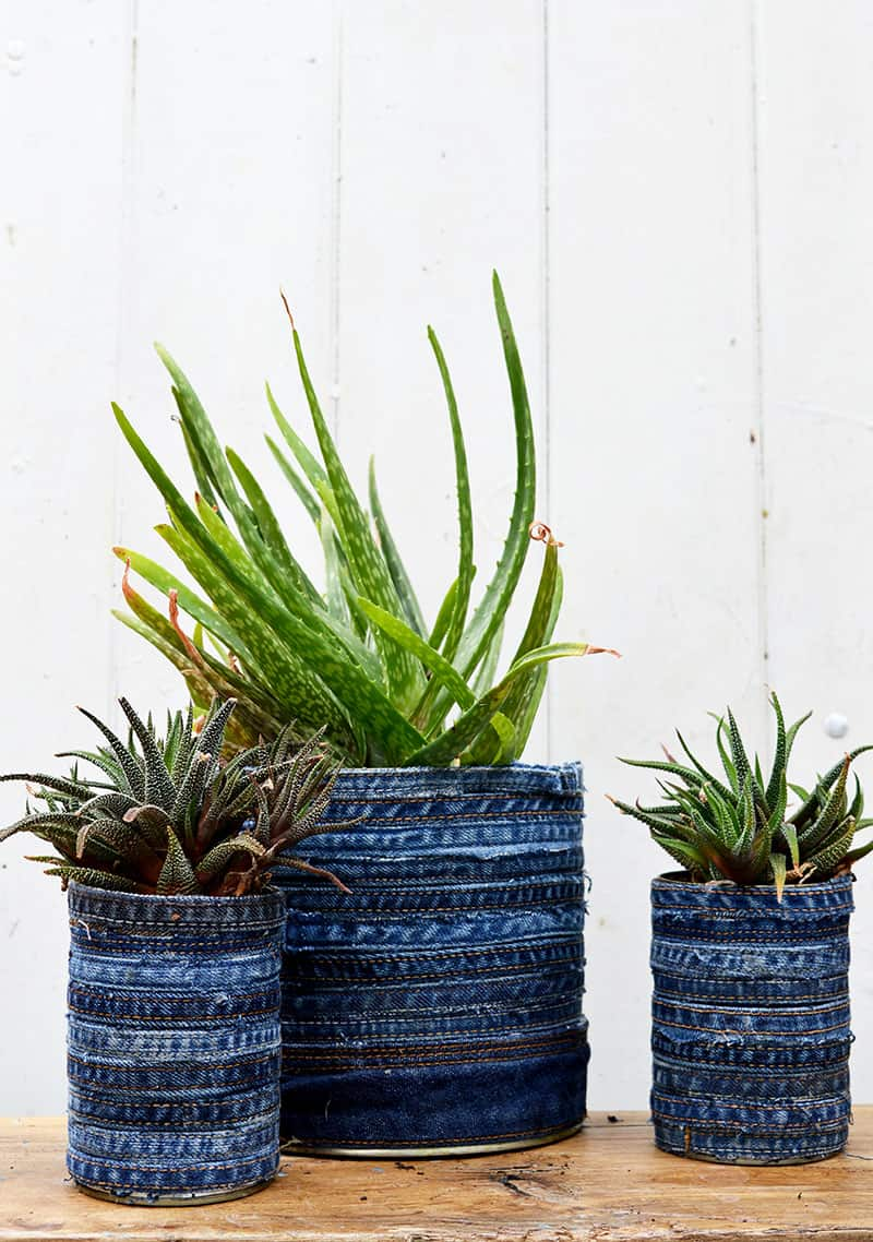 Old denim wrapped tin can planters.